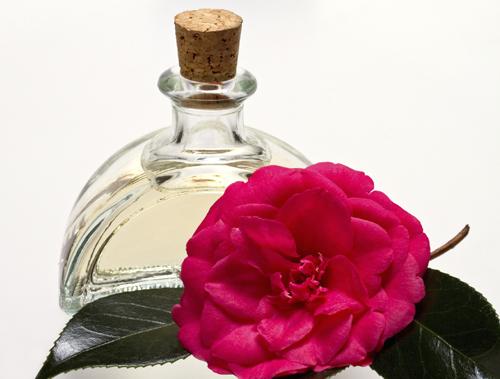 Camellia oil featured image